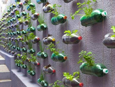This is a very smart  use of empty sod bottles!