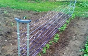 Re Purposed Crutches Into A Pea Trellis