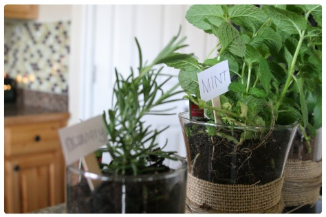 herb pot mint