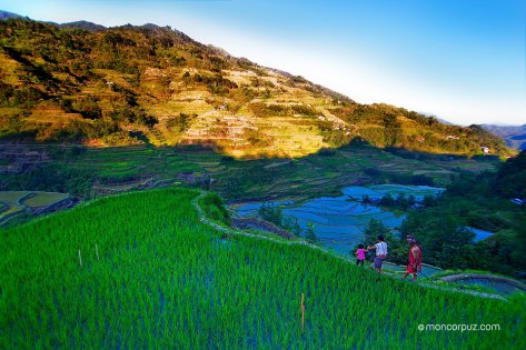Rice Terraces Mon