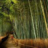 segano bamboo forest japan