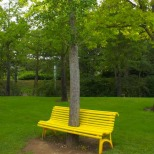 Tree Bench_Tyrone Alivio Share
