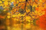 autumn 678