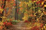 autumn 999